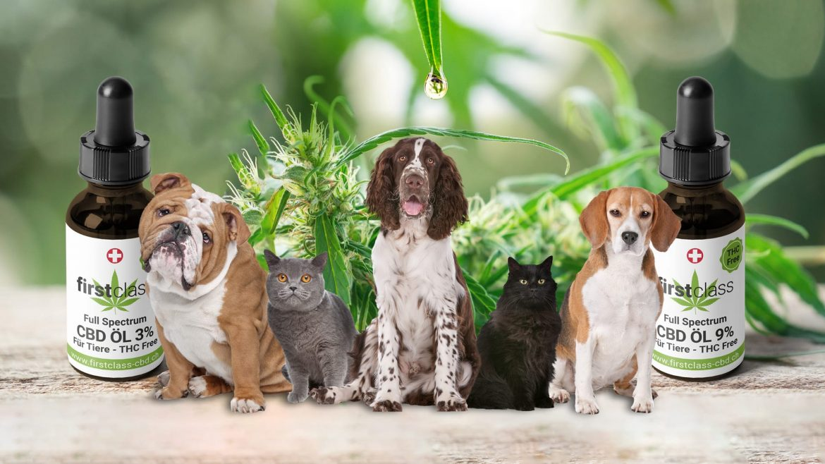 Prefer to use CBD products to improve the overall quality of life for your dogs.